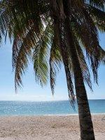 Palme am Strand von Kuba