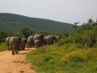 Abgang der Elefantenherde