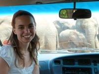 Viki und die Elefantenherde