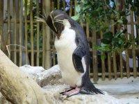 Pinguin, wohnhaft im Two Oceans Aquarium