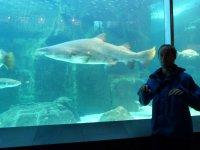 Bernd vor einem Haifisch
