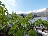 Blick vom Zimmer auf Weinstock und Tafelberg