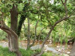 Wunderschoener Fluss in Stellenbosch
