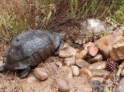 Schildkröten Rallye im Naturpark Stellenbosch